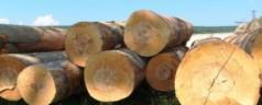 Работа с древесиной. Выбор материала