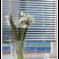Гармоничный союз: жалюзи и пластиковые окна