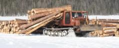 О заготовке древесины для сруба